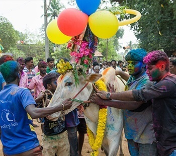The Pongal cheer